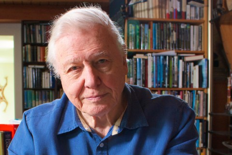 Picture Shows: David Attenborough at home (after filming interviews for Zoo Quest in Colour). 2016