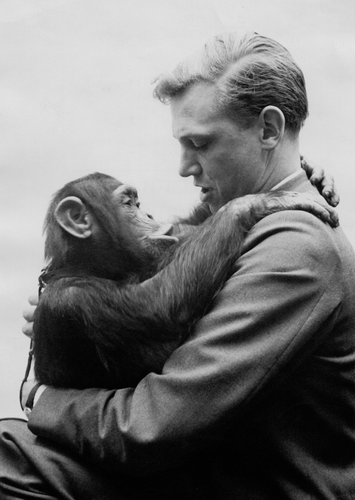 Picture Shows: David Attenborough reunited with Jane the chimp (after returning from their expedition to West Africa - Sierra Leone). Jane the chimp became a favourite with viewers